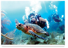 Environmental Image 3 - Swimming with Sea Turtles