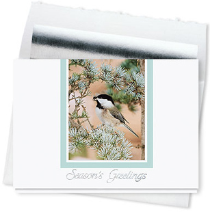 Design #574CS - Frosted Perch Wildlife Greeting Card