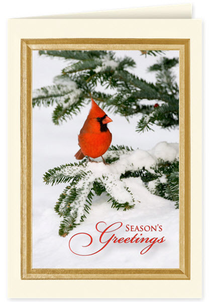 Season's Greetings Cardinal Holiday Card