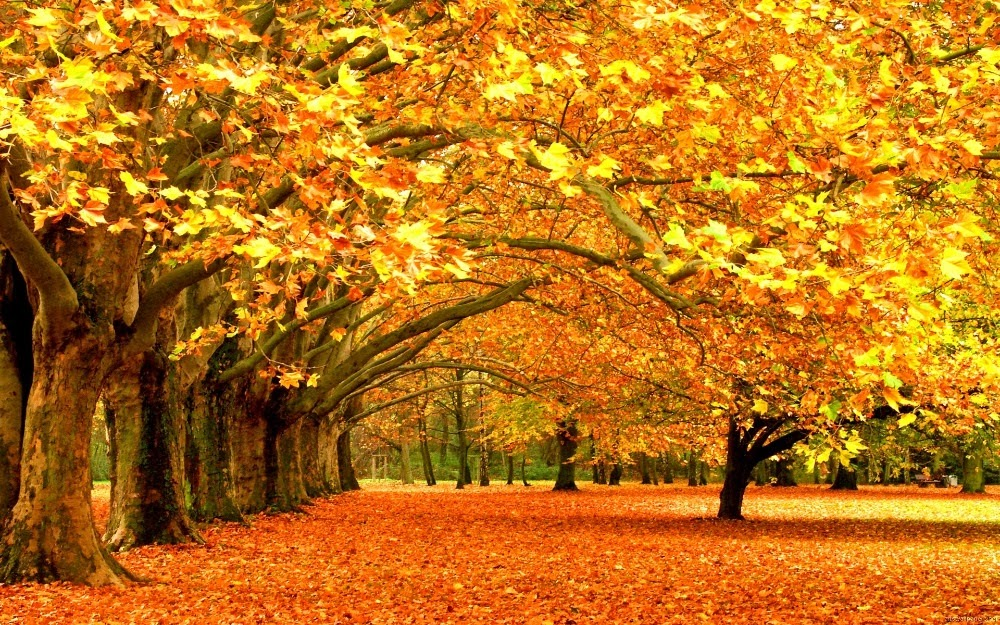 Kashmir in Autumn 5